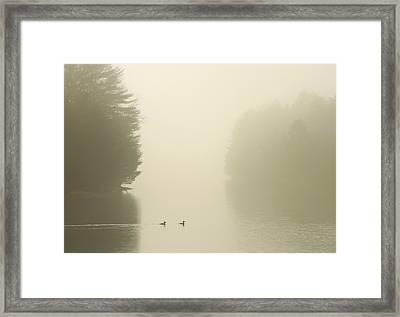 Common Mergansers In Morning Fog Framed Print by John Burk