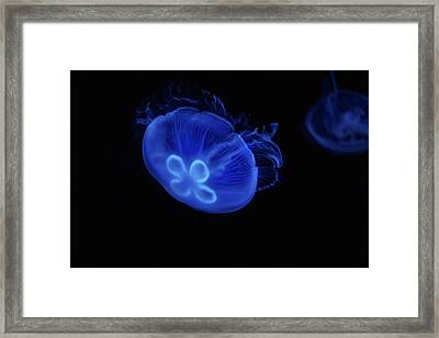 Common Moon Jelly Framed Print