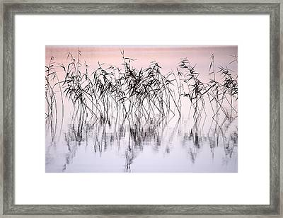 Common Reeds Framed Print by Jouko Lehto