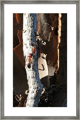Communication Is The Ant Sir Framed Print by Sean Green