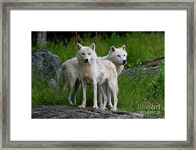Companions Framed Print by Michael Cummings