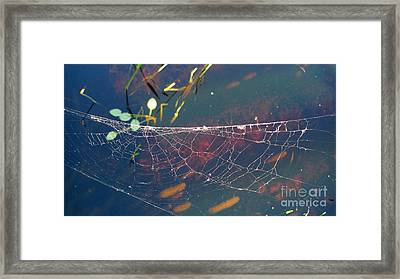 Framed Print featuring the photograph Complexity Of The Web by Nina Prommer