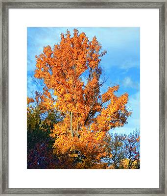 Complimentary Colors Framed Print by Michael Putnam