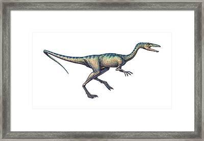 Compsognathus Dinosaur, Computer Artwork Framed Print by Joe Tucciarone