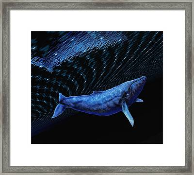 Computer Artwork Of A Humpback Whale Framed Print by Victor Habbick Visions
