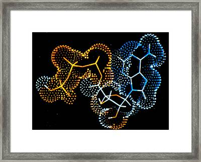Computer Graphic Of A Molecule Of Atp Framed Print by Francis Leroy, Biocosmos