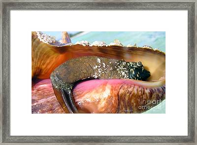 Conch Face- Who Knew Framed Print by Li Newton