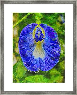 Conch Flower Framed Print