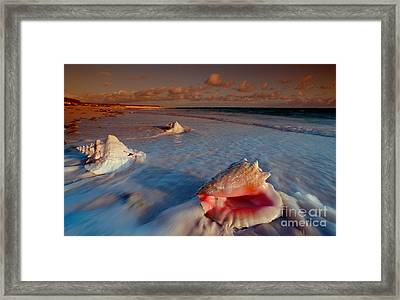 Conch Shell On Beach Framed Print by Novastock and Photo Researchers