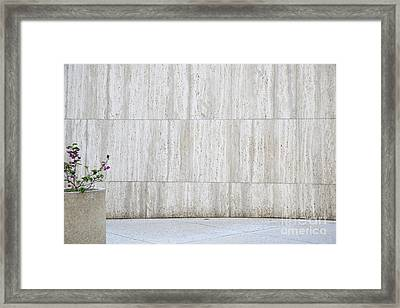 Concrete Planter With Flowers In Front Of Marble Wall Framed Print by Inti St. Clair