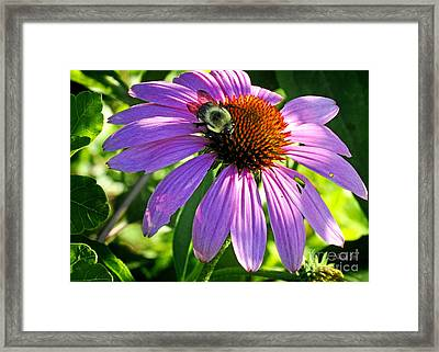 Framed Print featuring the photograph Cone Bee by Nava Thompson