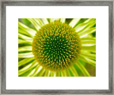 Cone Of The Cone In Lime Framed Print by Randy Rosenberger