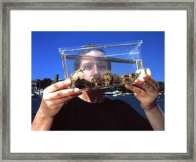 Cone Shell Researcher Framed Print by Volker Steger