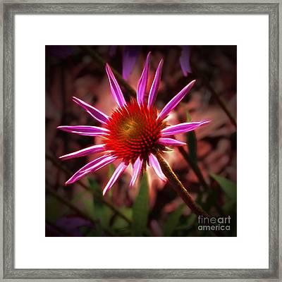 Coneflower 3 Framed Print by Judi Bagwell