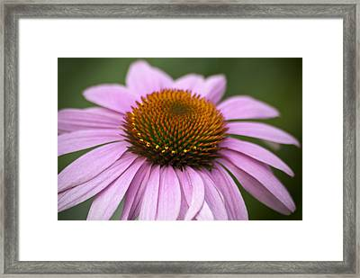 Coneflower Closeup Framed Print