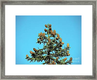 Framed Print featuring the photograph Cones by Nick Kloepping