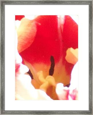Confetti Framed Print by Wide Awake Arts
