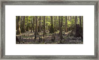 Congaree National Park  Framed Print