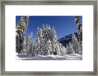 Coniferous Forest In Winter Framed Print by Konrad Wothe