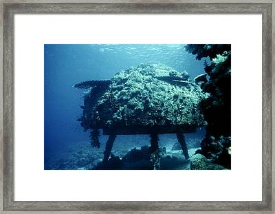 Conshelf Two, Red Sea Framed Print by Georgette Douwma