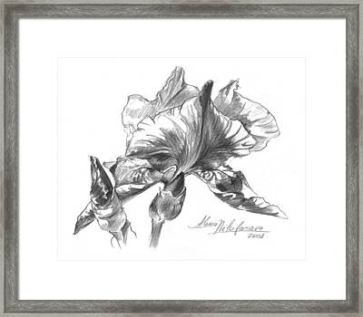 Conte Pencil Sketch Of Iris Framed Print