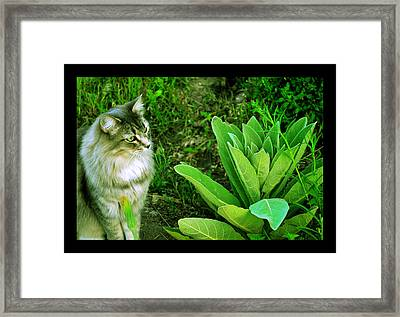 Framed Print featuring the photograph Contemplating The Nature Of Mullein by Susanne Still