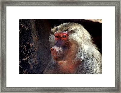 Framed Print featuring the photograph Contemplation by Jo Sheehan