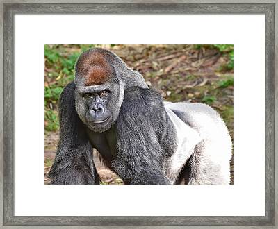 Contemplation Framed Print by Mark Walter