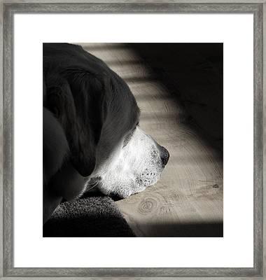 Contemplation Framed Print by Fiona Messenger