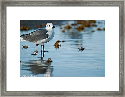 Contemplative Framed Print by Barbara Shallue