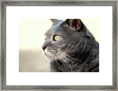 Contemplative Cat Framed Print by Helen Yin