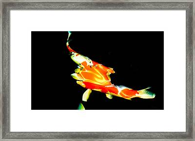 Contemporary Koi Photo Painting Framed Print