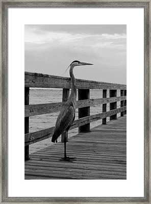 Content Framed Print