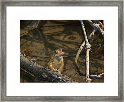 Content Framed Print by Natalie Long