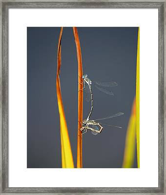 Continuation Framed Print