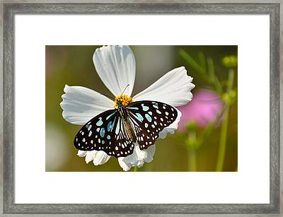 A Study In Contrast Framed Print