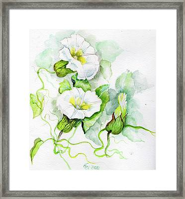 Convolvulus Framed Print by Angelina Whittaker Cook