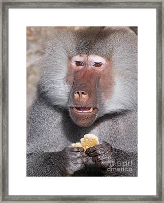 Cookie Framed Print by Andrew  Michael