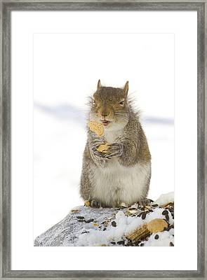 Cookie Squirrel Framed Print