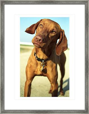 Framed Print featuring the photograph Cooksie by Jim  Arnold