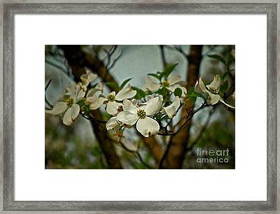 Cool Breeze Framed Print by Lois Bryan