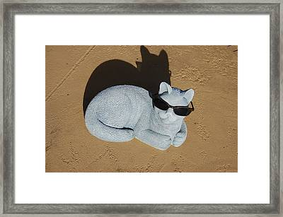 Cool Cat Framed Print by Aimee L Maher Photography and Art Visit ALMGallerydotcom