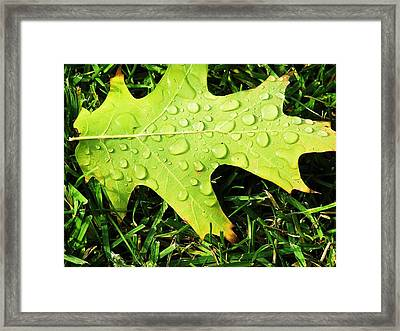 Cool Morning Dew Framed Print