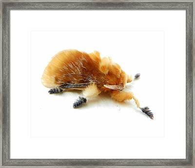 Cool Moth Framed Print by Chad and Stacey Hall