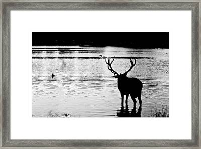 Framed Print featuring the photograph Cooling Off Deer by Maj Seda