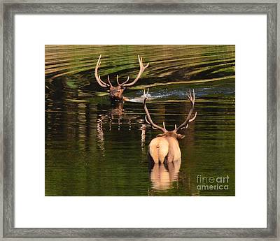 Framed Print featuring the photograph Cooling Off by Jack Moskovita