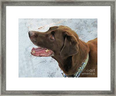 Cooper Framed Print by Laura Holt