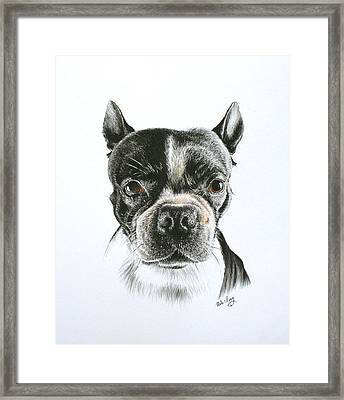 Cooper Framed Print by Mike Ivey
