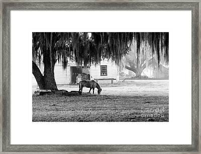 Coosaw - Grazing Free Framed Print by Scott Hansen