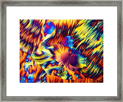 Copper And Magnesium Sulphate, Lm Framed Print by Dr Keith Wheeler